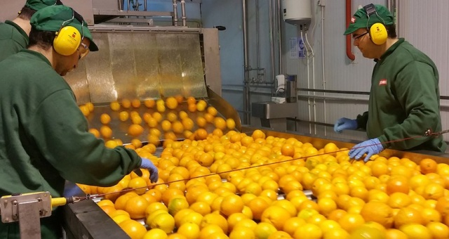 READYGo d-LIMONENE helps Spanish juice company add value | The